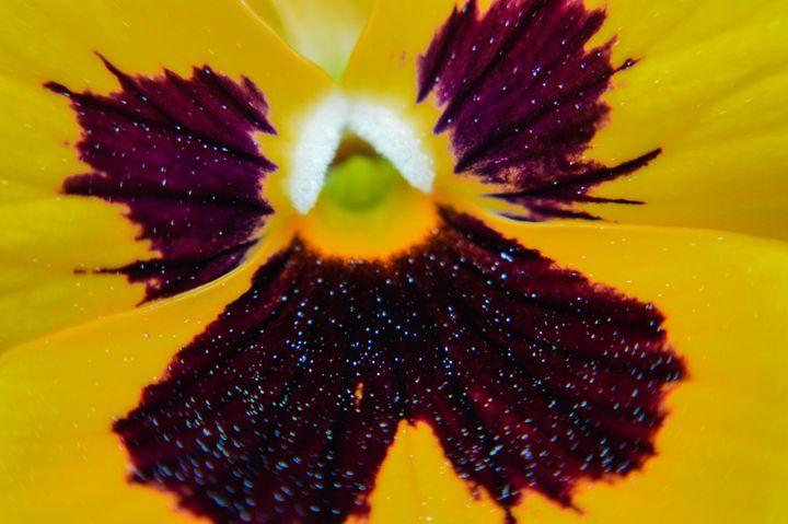 Flower Power - Miranda Strap
