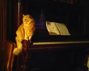 My Cat Mozart