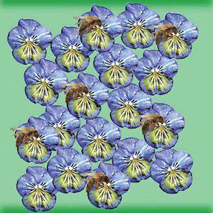 Honey Bee On Blue Iris