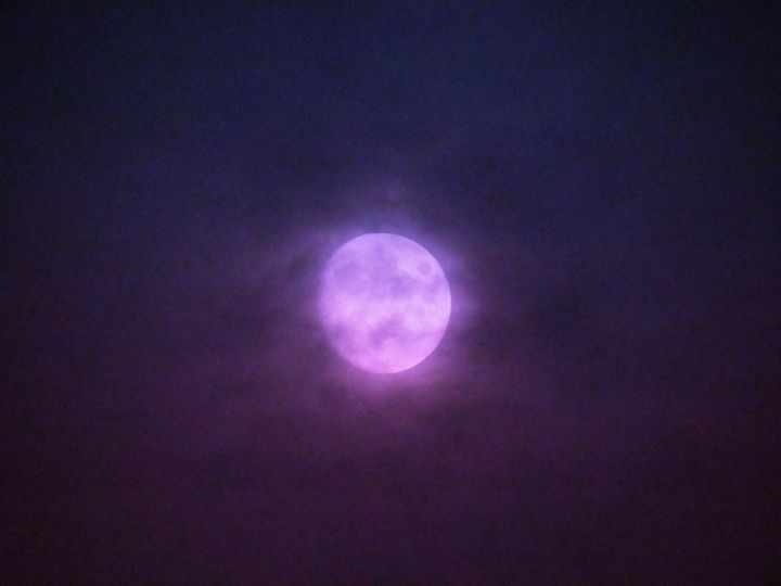 Purple haze - Casey's Art and Photography