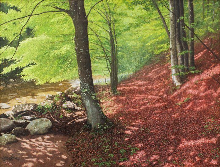 Beech Forest - dejan-trajkovic