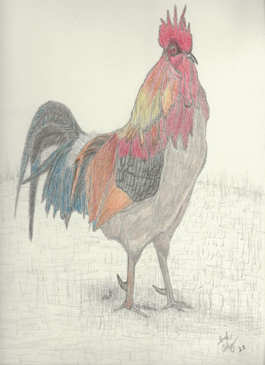 Rooster - My Art