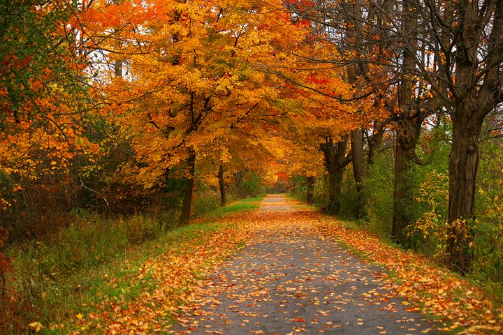 Erie Canal in Autumn - Old Farmhouse Creations