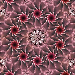 Spiral Rosy Fractals