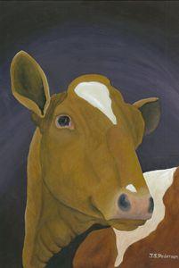 Sassy Guernsey Heifer