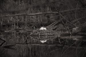 the nest - silence before the storm - Markus Hofstätter