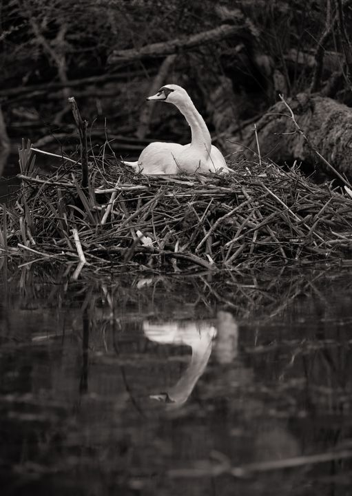 reflection - is that you? - Markus Hofstätter
