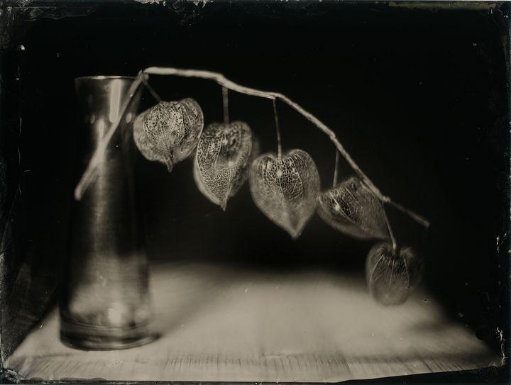 life within death - Markus Hofstätter