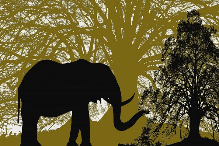 INTO THE FOREST ELEPHANT - IMPACTEES STREETWEAR ARTWORKS