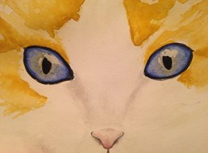 Blue Eyed Tabby