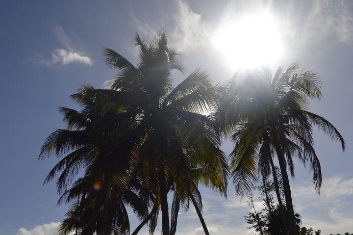 Sunny Palms - KayDreamer's Photography
