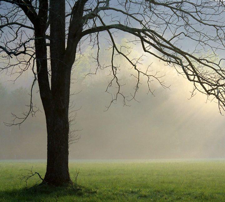 Spring Mist - Fatherree