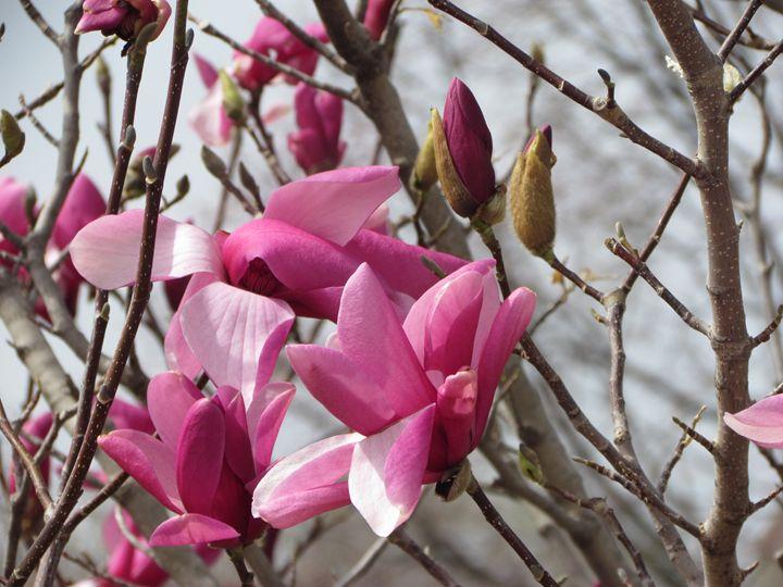 springtime - Kali's Moments