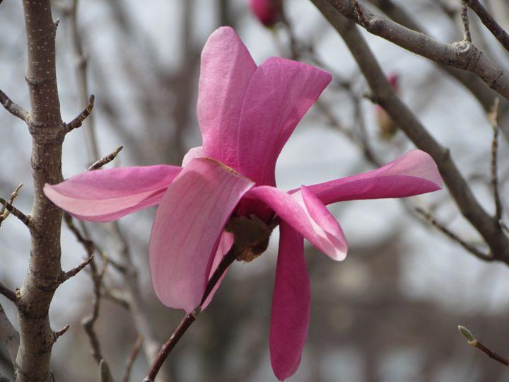 Flower - Kali's Moments