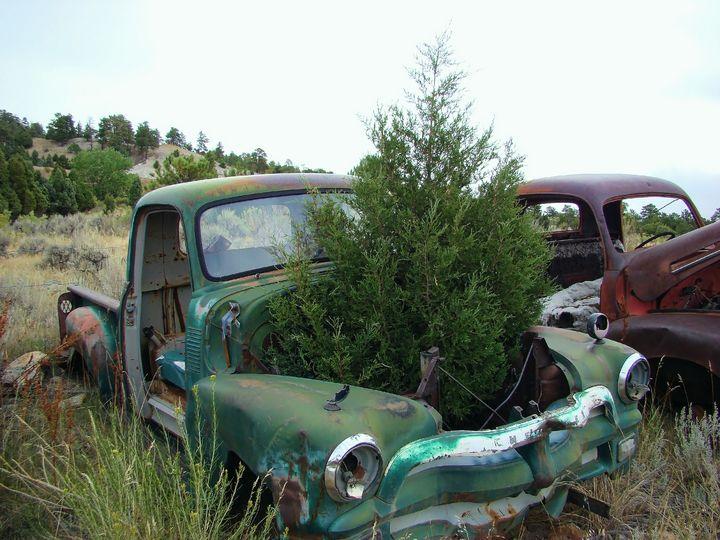 A tree grows in it junkyard scene - Cathy L. Anderson