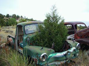 A tree grows in it junkyard scene