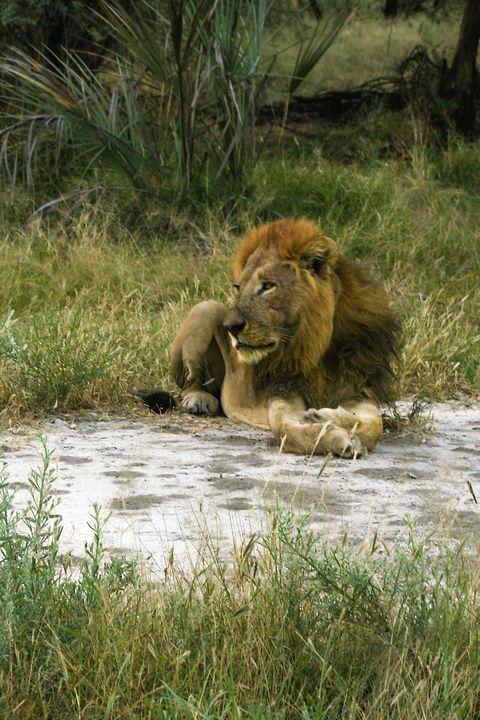 King of the Jungle - Art by Karen Zuk Rosenblatt