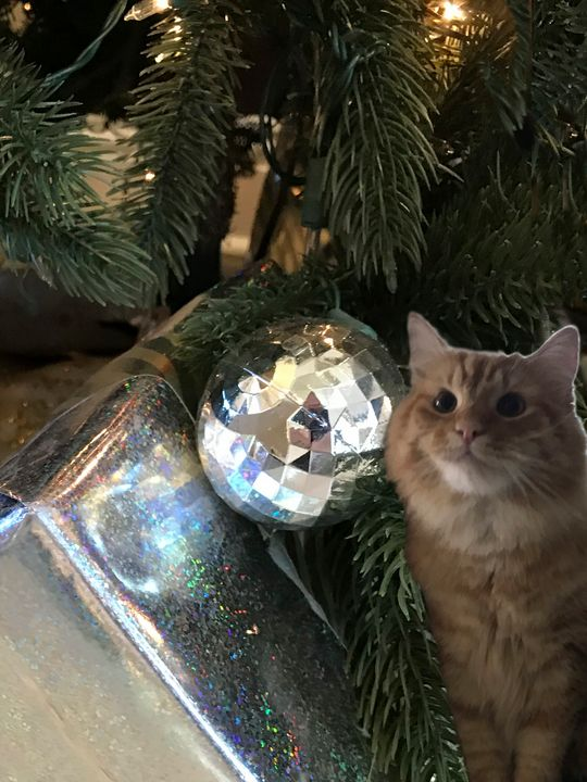 Holiday Ginger Cat - Art by Karen Zuk Rosenblatt