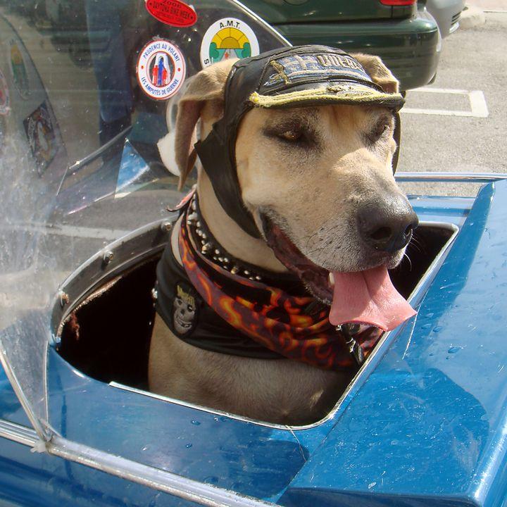 Tourist Dog 2 Square - Art by Karen Zuk Rosenblatt