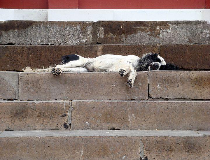 Street Dog Sleeping On Church Steps - Art by Karen Zuk Rosenblatt