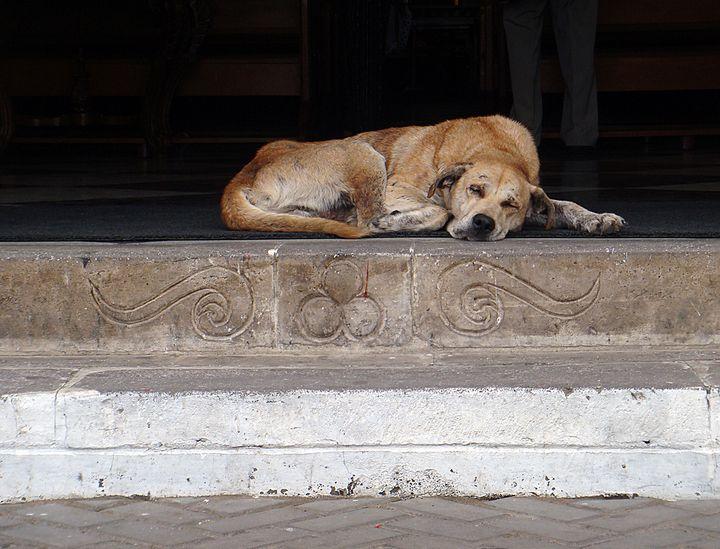 Sleeping Street Dog At Church - Art by Karen Zuk Rosenblatt