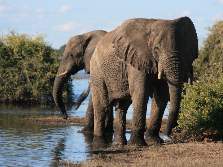 Elephants At The River - Art by Karen Zuk Rosenblatt