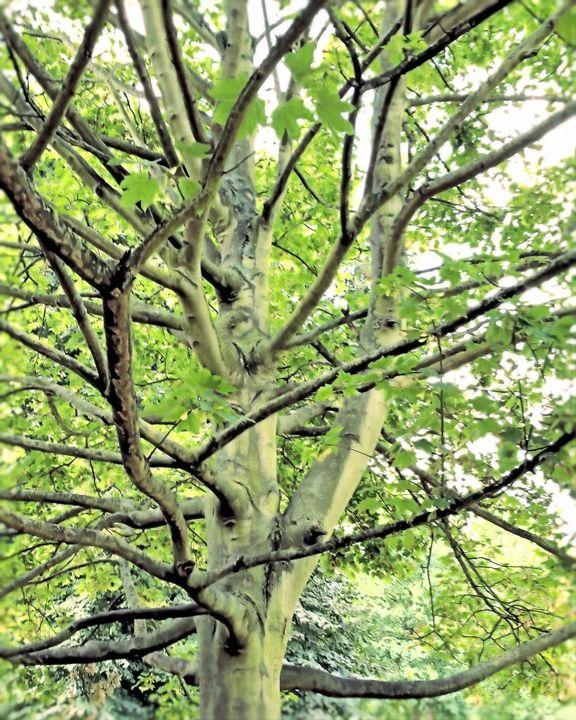 Art Tree - MEMory