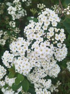 Bushy Blooms