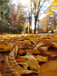 The Crunch of Autumn
