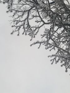 Branches Glazed in Ice