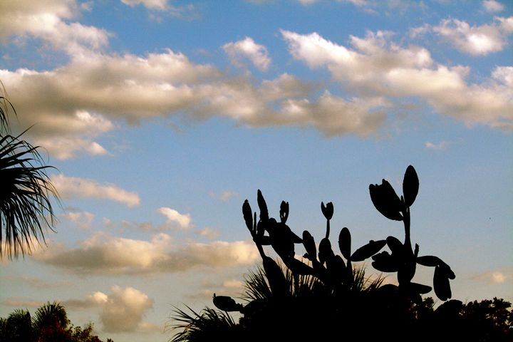 Clouds 10 - Charlie Reese