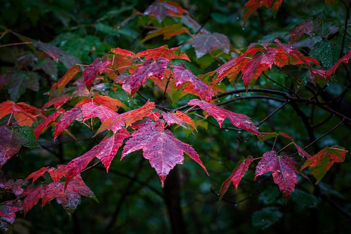 Just leaves - Su Buehler Photography