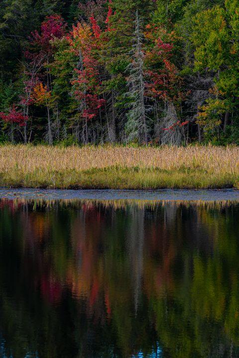 Autumn in Algonquin - Su Buehler Photography