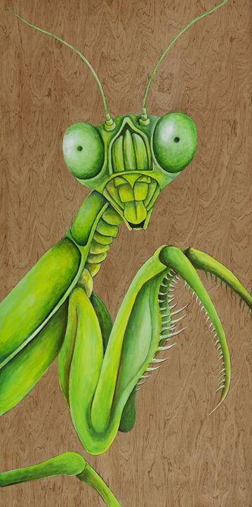 Praying Mantis - Skee Goedhart Fine Art