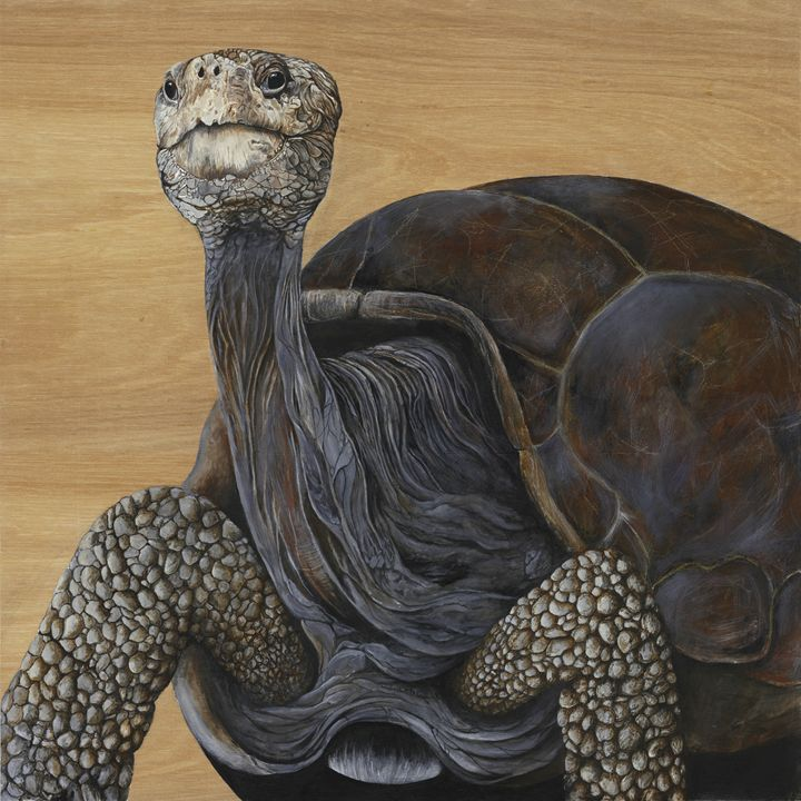 Lonesome George - Skee Goedhart Fine Art