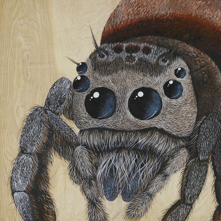 Jumping Spider - Skee Goedhart Fine Art
