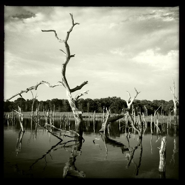 BW Trees in Water - Tommy Foster