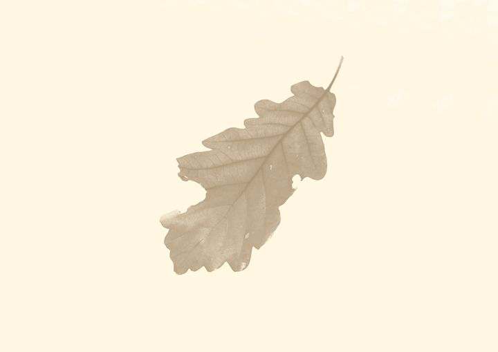 The simple leaf 2 - Pastel Leaf