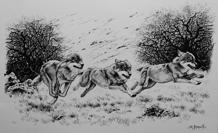 Wolves on the run - Jose Miguel Blanco