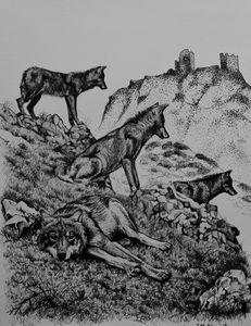 The last wolves of Sierra Morena
