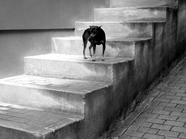 Cautious - DANIEL RAVEL PHOTOGRAPHY
