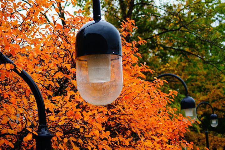 Autumn Lamps - FzN Photography & Art