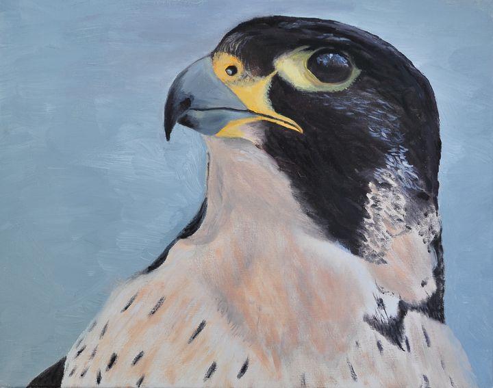 Peregrine Falcon, Kgalagadi - Suzanne Leighton