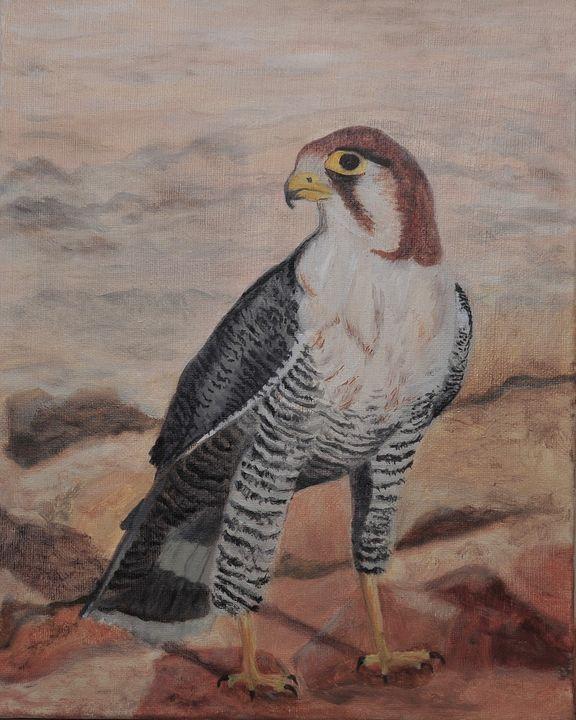 Kgalagadi - Red Necked Falcon - Suzanne Leighton