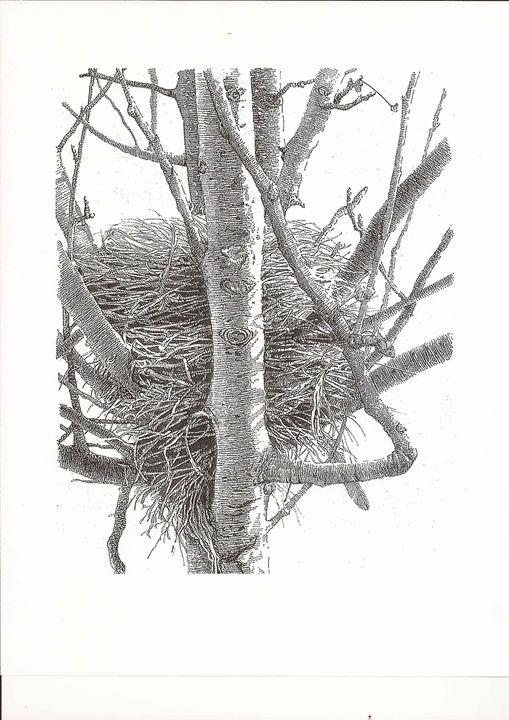 Birds Nest - Miller's Pen