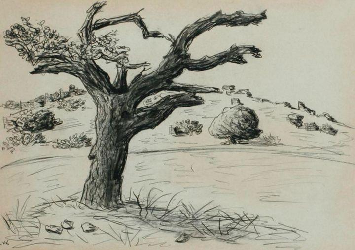 Old oak tree - Amit Bar