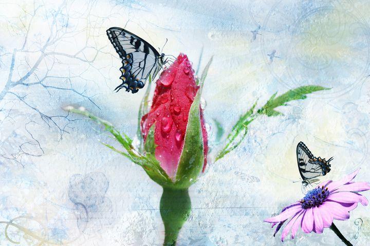 Misty Morning Rose - Gypsy Jos Art
