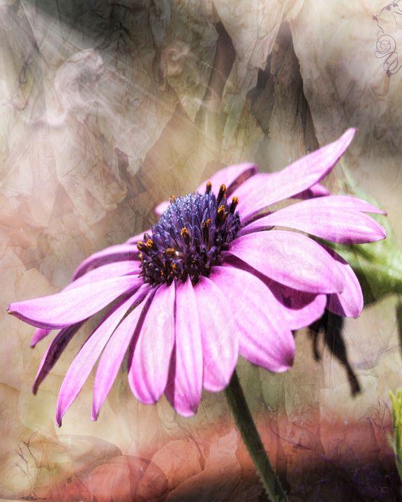 Purple Zen - Gypsy Jos Art