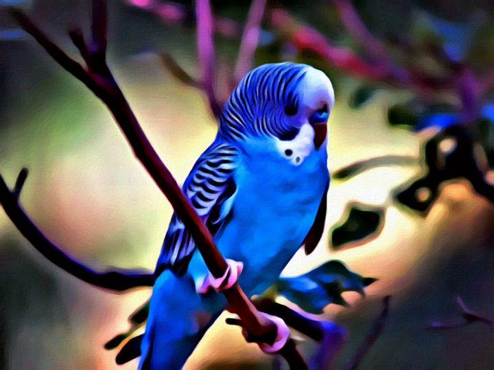 """Parakeet in the Bush"" - Prints by Michel"