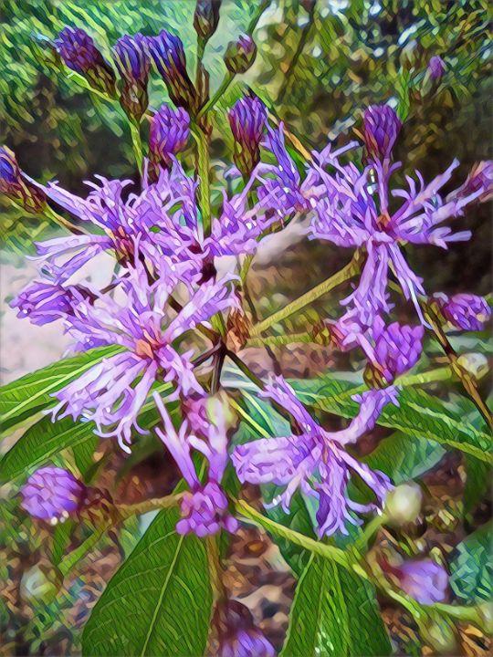 Flowers 9/13/2021 - Robert Yancey